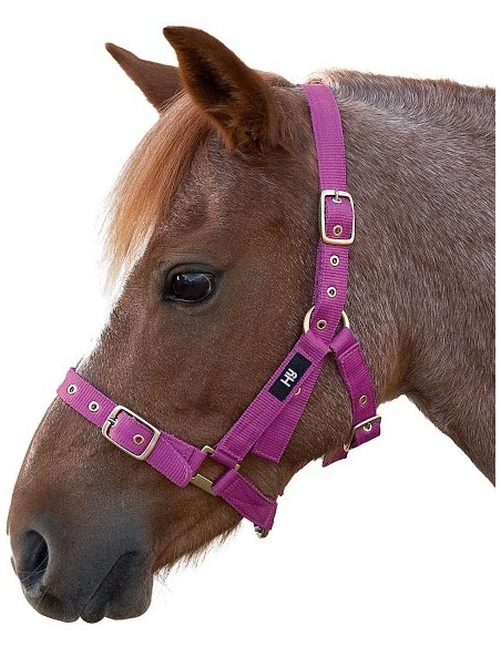 Hy Holly Fully Adjustable Head Collar