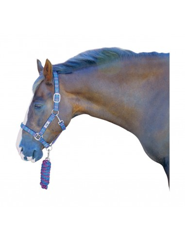 Hy Tartan Head Collar with Lead Rope Kingfisher