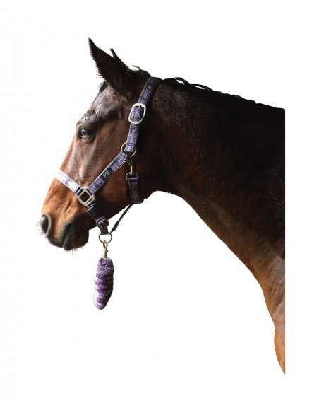 Hy Tartan Head Collar with Lead Rope Purple Lilac