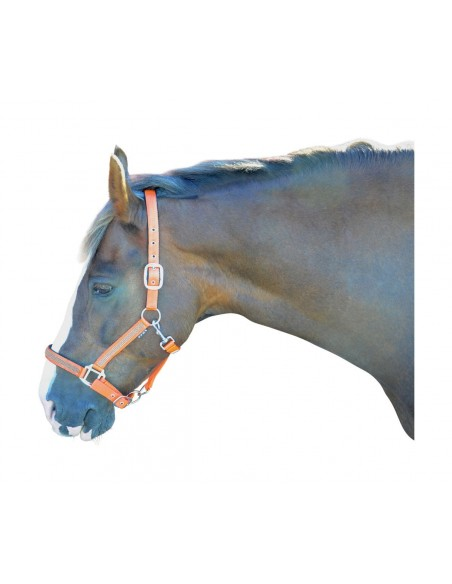 Hy Diamante Head Collar Orange