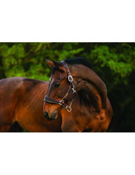 Horseware Rambo Padded Head Collar Witney Gold