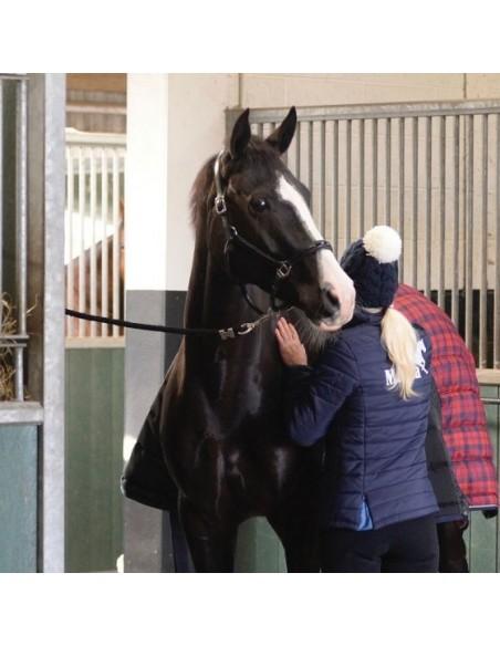 Masta Quiltmasta 350g Stable Rug HORSE