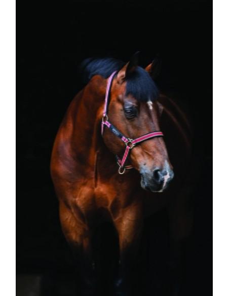 Horseware Amigo Headcollar red white green black